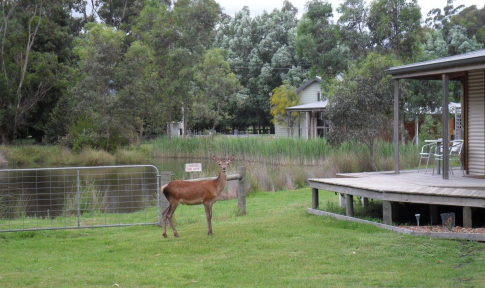 Original__9041179_Ag44_New_Deer_And_Emu_019_8503F49