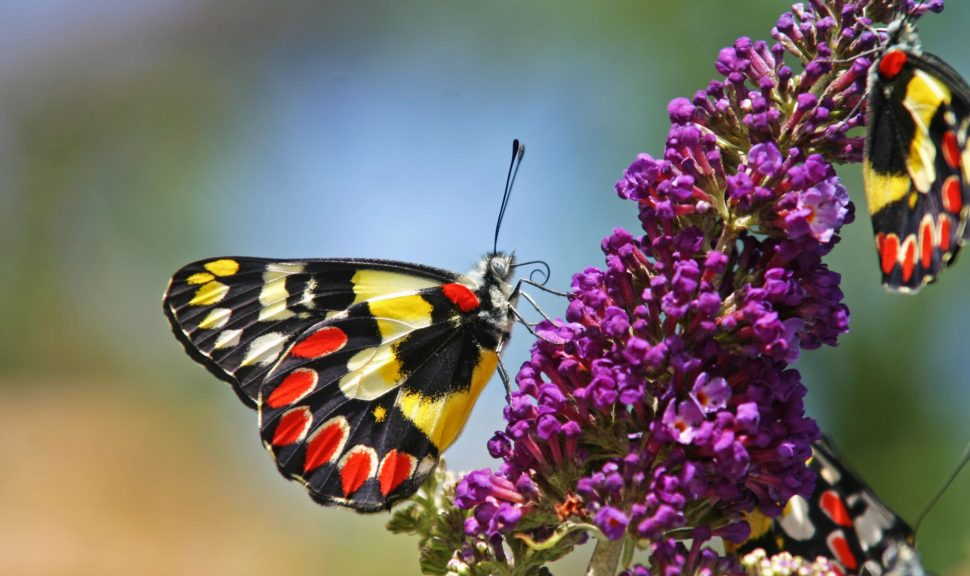 Original__9512444_Db46_Butterflies_Vy9Bquu