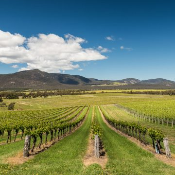 Mt-Langi-Winery-Landscape-East-Ararat-21
