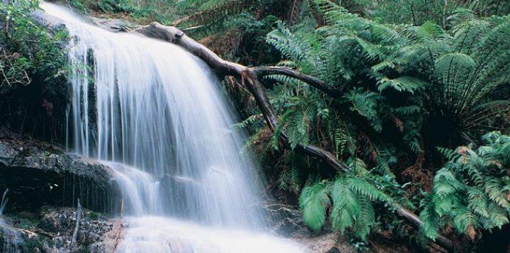 Ferntree-Falls