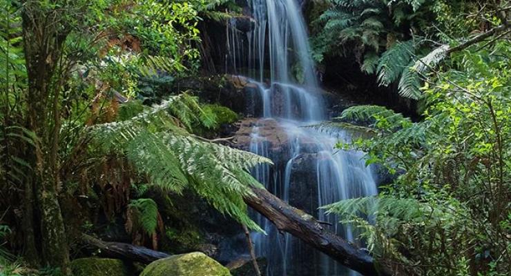 Ferntree-Waterfall-Nature-Walk-Buangor-State-Park-2