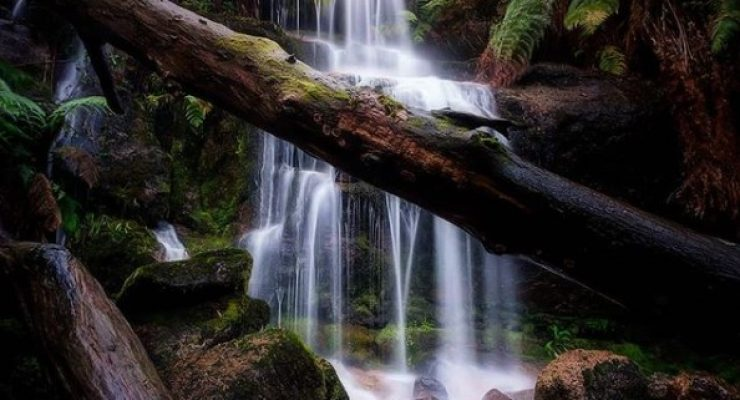 Ferntree-Falls-Adam-Dyson