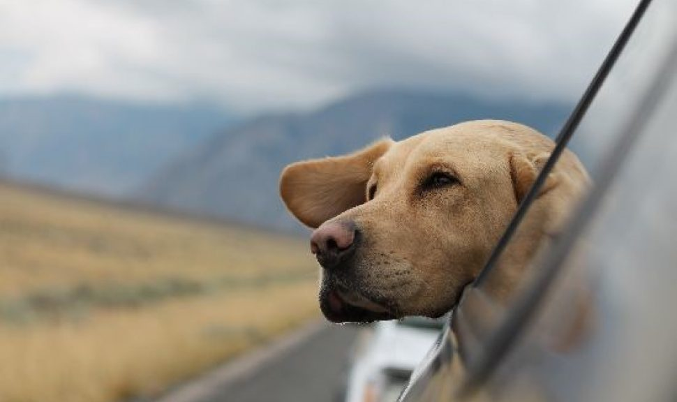 Dog-Happy-Space