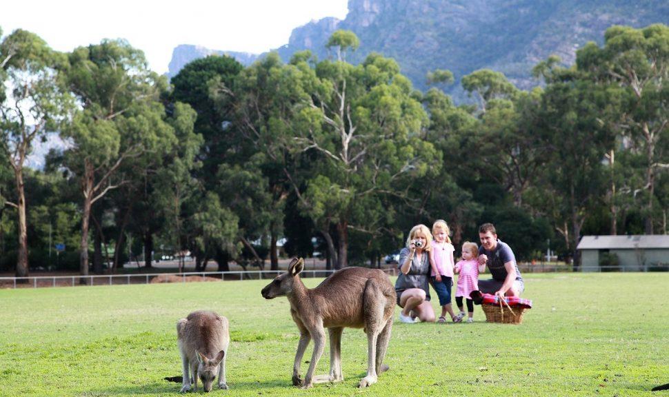 Family-W-Kangaroos-Halls-Gap