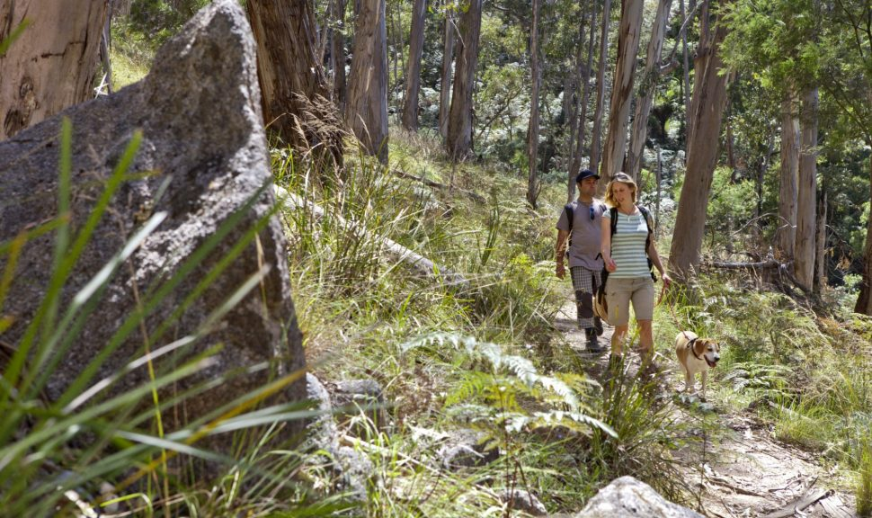 Mt_Cole_Bushwalking_6207