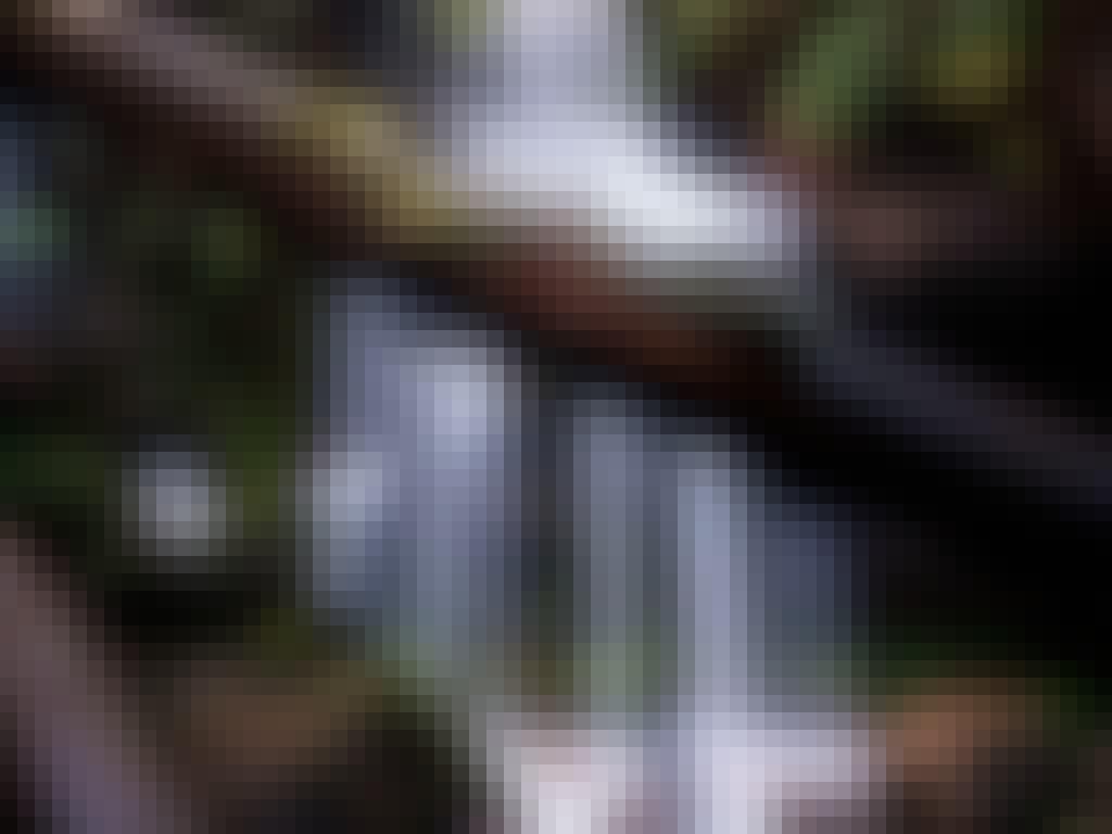 Ferntree falls adam dyson